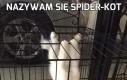 Nazywam się Spider-Kot