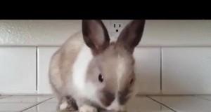 Żądny krwi króliczek
