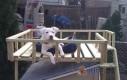 Buda dla psa z pięterkiem