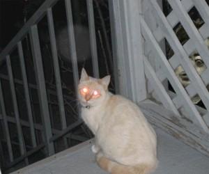 Psychodeliczny kot