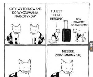 Dlaczego koty nie są zatrudniane w policji...
