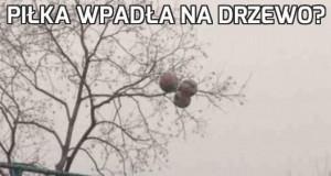 Piłka wpadła na drzewo?