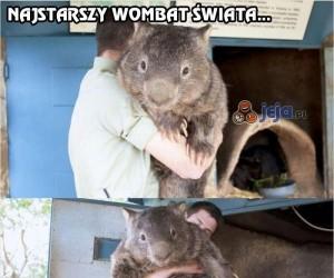 Najstarszy wombat świata