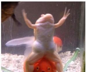 Co ta żaba wyprawia?
