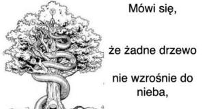 Co się mówi o drzewach?