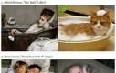 Kocie falsyfikaty