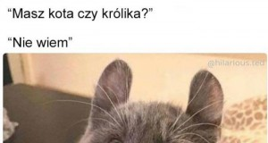 Królik to czy kot?
