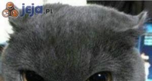 Kot przed i po