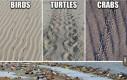 Ślady zostawiane przez różne gatunki zwierząt