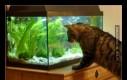 Otwórz akwarium,dobrze?