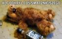 Alf odkrył coś smaczniejszego