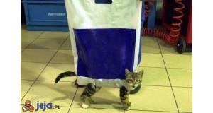Kot w torbie
