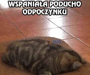 Mój kot chyba medytuje