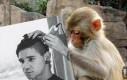 Tymczasem w internecie dla Planecie Małp