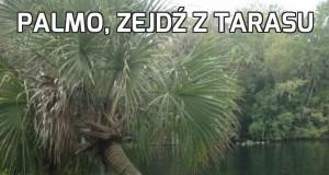 Palmo, zejdź z tarasu