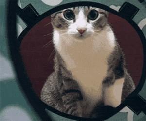 Kot w 3D