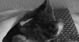 Koci przytulasek
