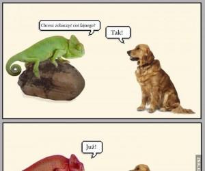 Problemy psów