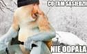 Janusze zimą