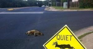 Cisza - zwierzęta drzemią