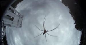 Olbrzymi księżycowy pająk ukazał się tej nocy na księżycu!