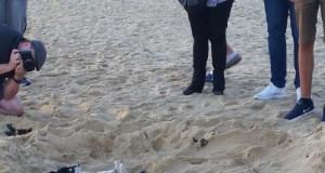 Husky na plaży