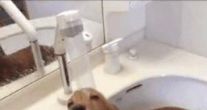 Ten psiak uwielbia wodę