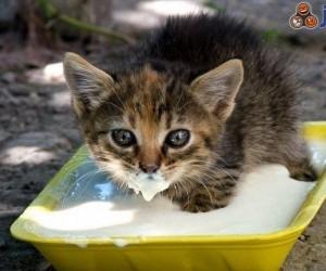 Młody kotek