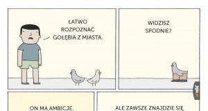 Gołębie z miasta