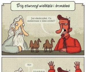 Bóg stworzył wielbłąda i dromadera