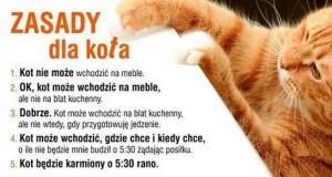 Zasady dla kota