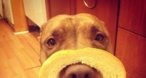 Najbardziej cierpliwy pies świata