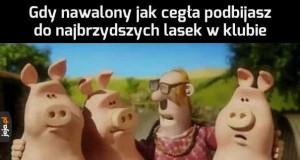 Niezłe z nich świnki