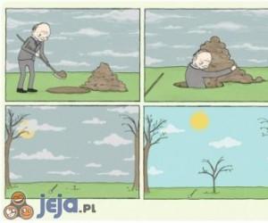 Drzewo i życie