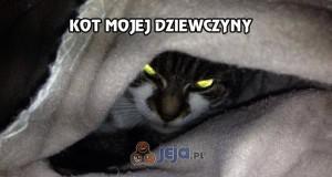 Kot mojej dziewczyny chyba mnie nie lubi