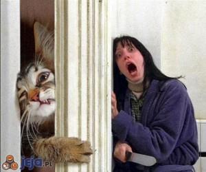Gdy koteł atakuje...