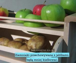 Sposób na przechowywanie ziemniaków