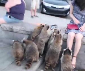 Gang złodziei