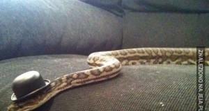 Gustowne węże