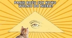Niebo nie dla kotków