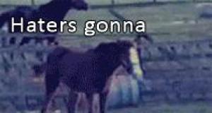 Koń na lodzie