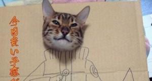 Sztuka z kotem w pudełku