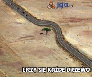Liczy się każde drzewo