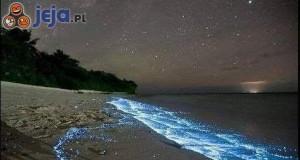 Świecące meduzy