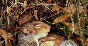 Tulące się wiewiórki