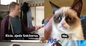 Nie taki zły ten kot