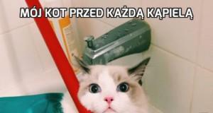 Mój kot przed każdą kąpielą