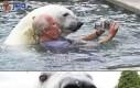 Przyjaźń człowieka z niedźwiedziem polarnym