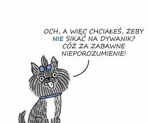 Psy świetnie rozumieją, one po prostu udają...