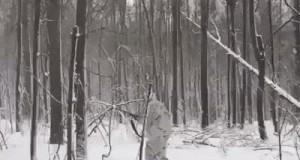Przy skradaniu do dzikiego zwierza trzeba zachować czujność